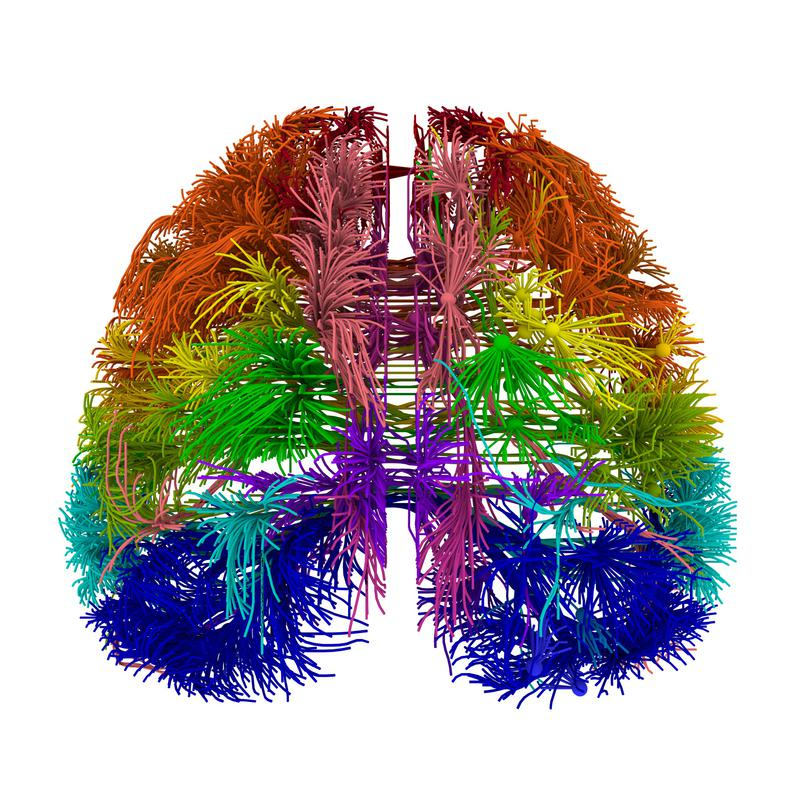Recreación del conectoma del ratón. Fuente: Nature.
