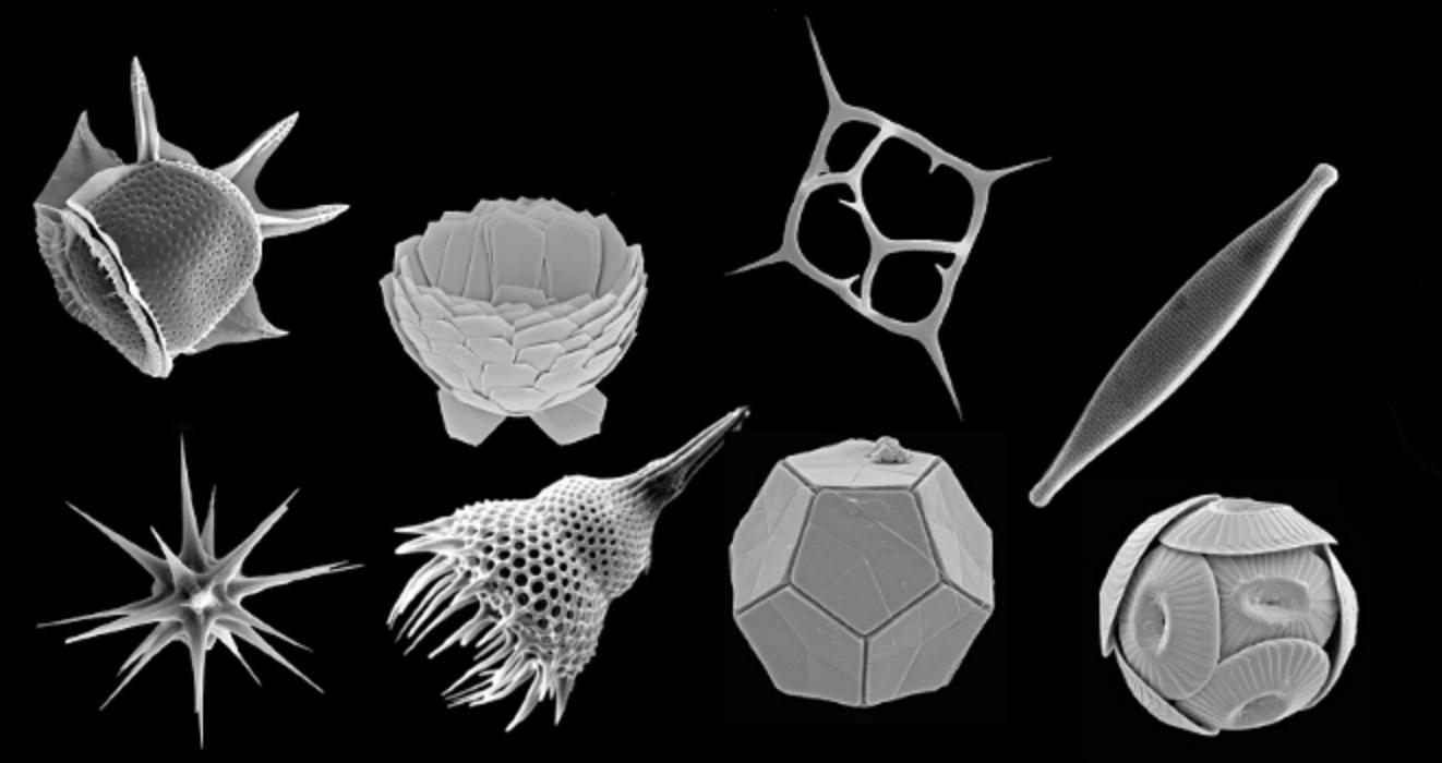 Eucariotas microbianos estudiados por el CSIC. Fuente: CSIC.