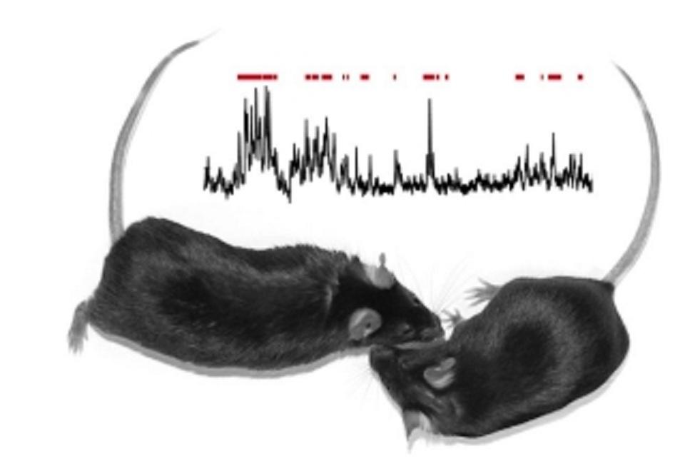 Estimular una zona del cerebro hace a los ratones más proclives a socializar. Imagen: Isaac Kauvar y Karl Deisseroth. Fuente: Universidad Stanford.