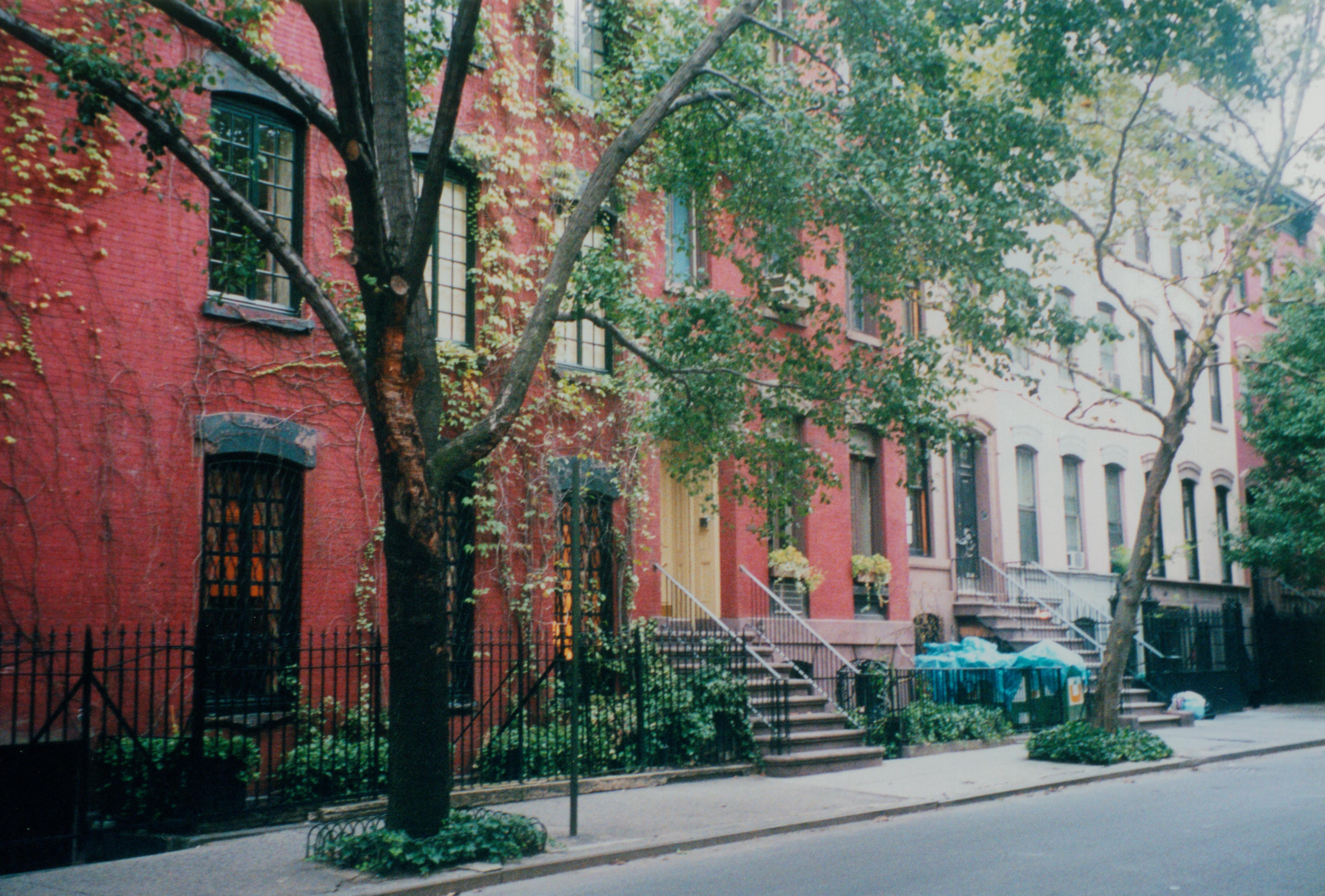 Árboles en Nueva York. Imagen: bekkli. Fuente: MorgueFile.