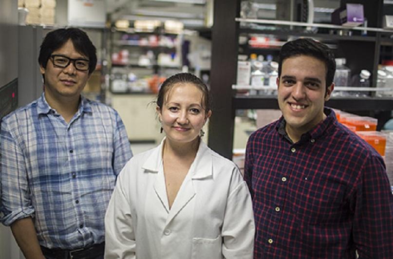 Andrew Yoo (a la izquierda) y sus colaboradores Michelle Richner y Matheus Victor. Fuente: Escuela de Medicina de la Universidad de Washington.