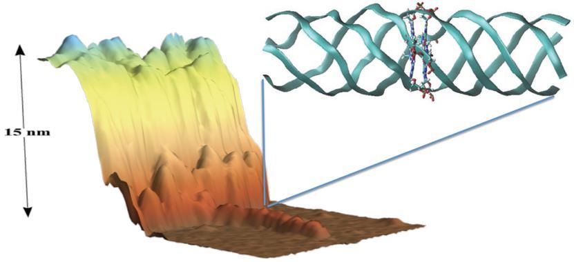Imagen tomada con un microscopio de fuerzas atómicas de una molécula de G4-ADN depositada sobre una superficie de mica. La estructura atómica del G4-ADN se muestra arriba a la derecha. Fuente: UAM Gazette.
