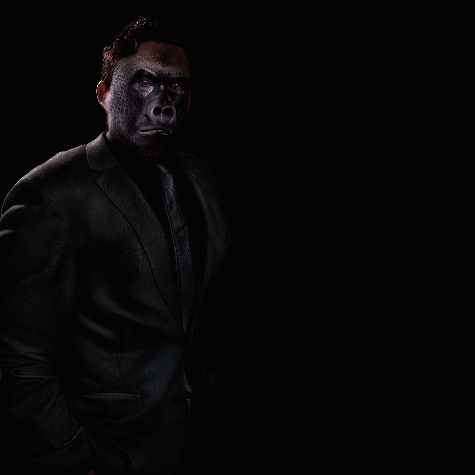"""""""Gorilla – Like a boss"""". Imagen: David Blackwell. Fuente: Flickr."""