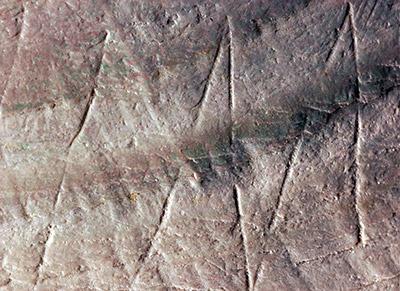La concha con el grabado en zigzag, procedente de Java. Imagen: Wim Lustenhouwer. Fuente: Universidad VU.