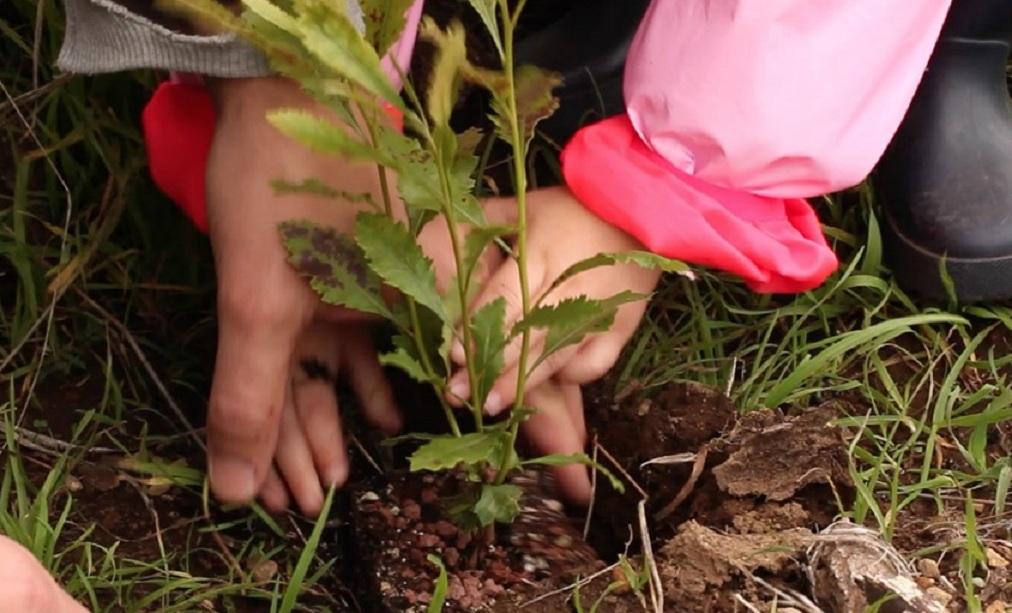 Plantando un árbol en la Corona Forestal. Foto: Mirlo Positive Nature.