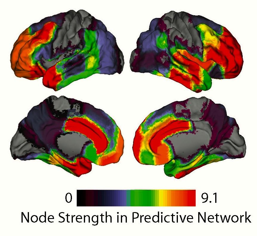Fuerza de las conexiones entre áreas cerebrales de la superficie cortical. Los colores cálidos indican gran fuerza y los fríos lo contrario. Fuente: UC Santa Barbara.