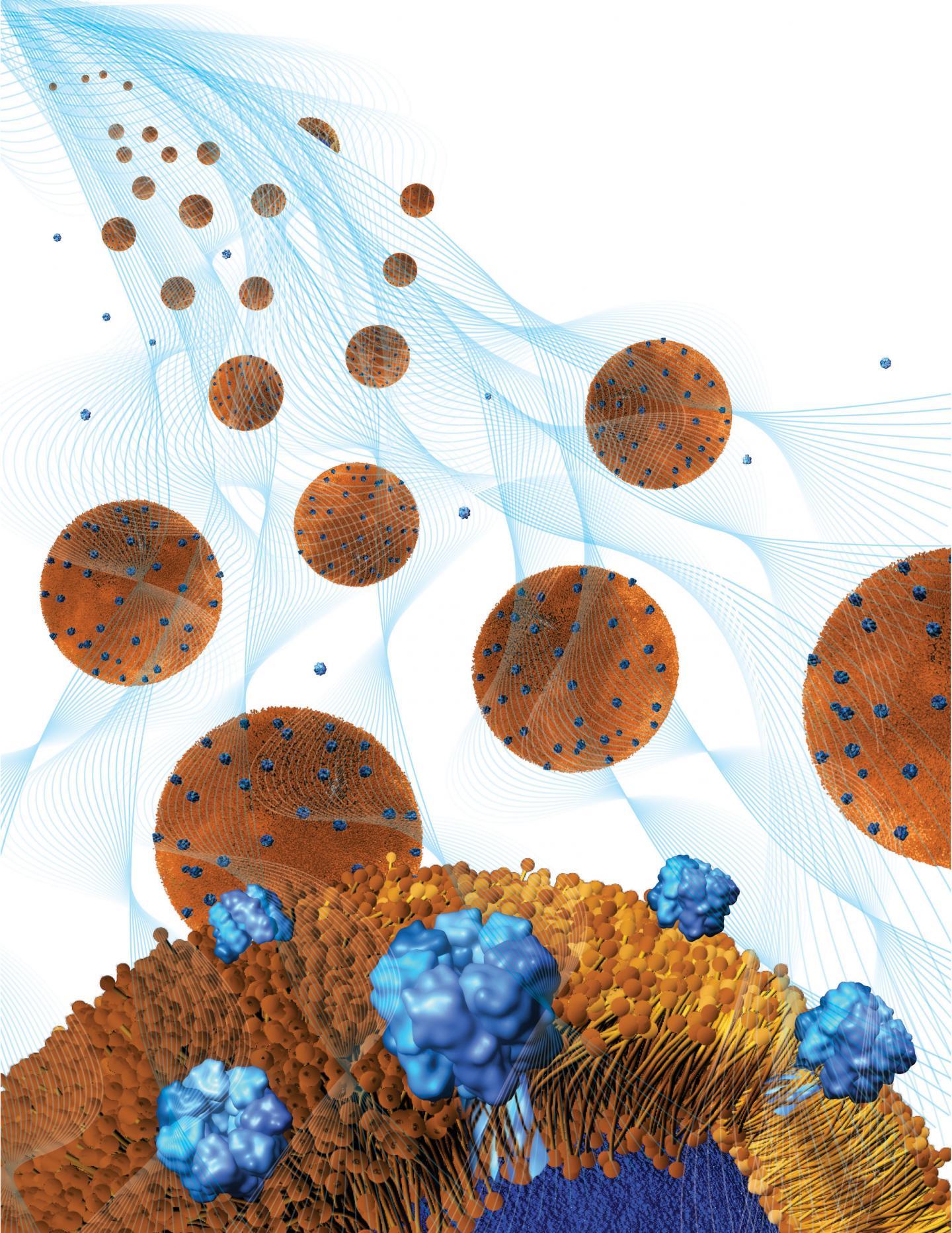 Nanoesponjas absorbentes de toxinas bacterianas, ubicadas dentro de un hidrogel. Fuente: Weiwei Gao/Jacobs School of Engineering/UC San Diego.