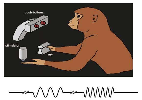 El experimento con primates. Fuente: UPF.