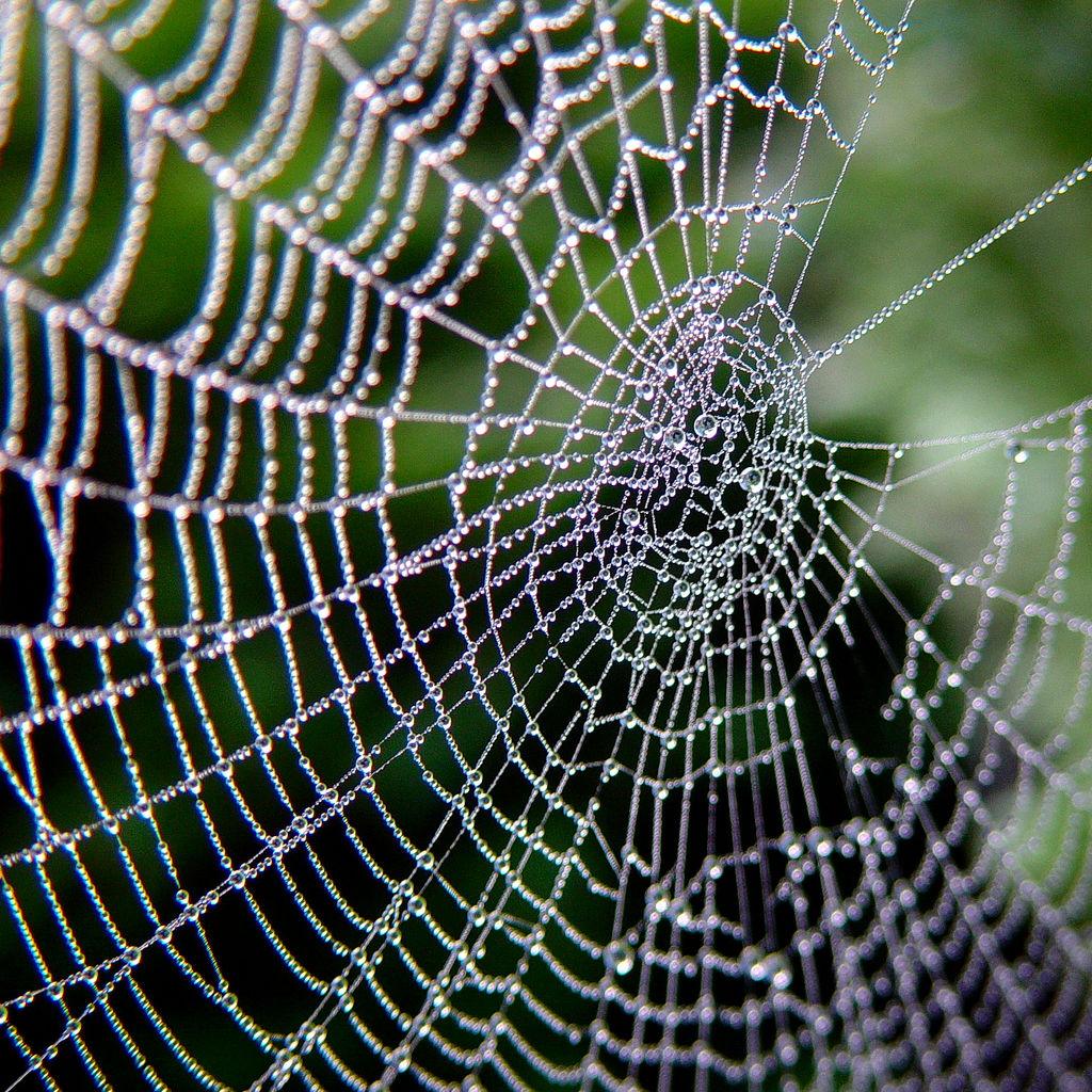 Una telaraña natural. Imagen: josef.stuefer. Fuente: Flickr.
