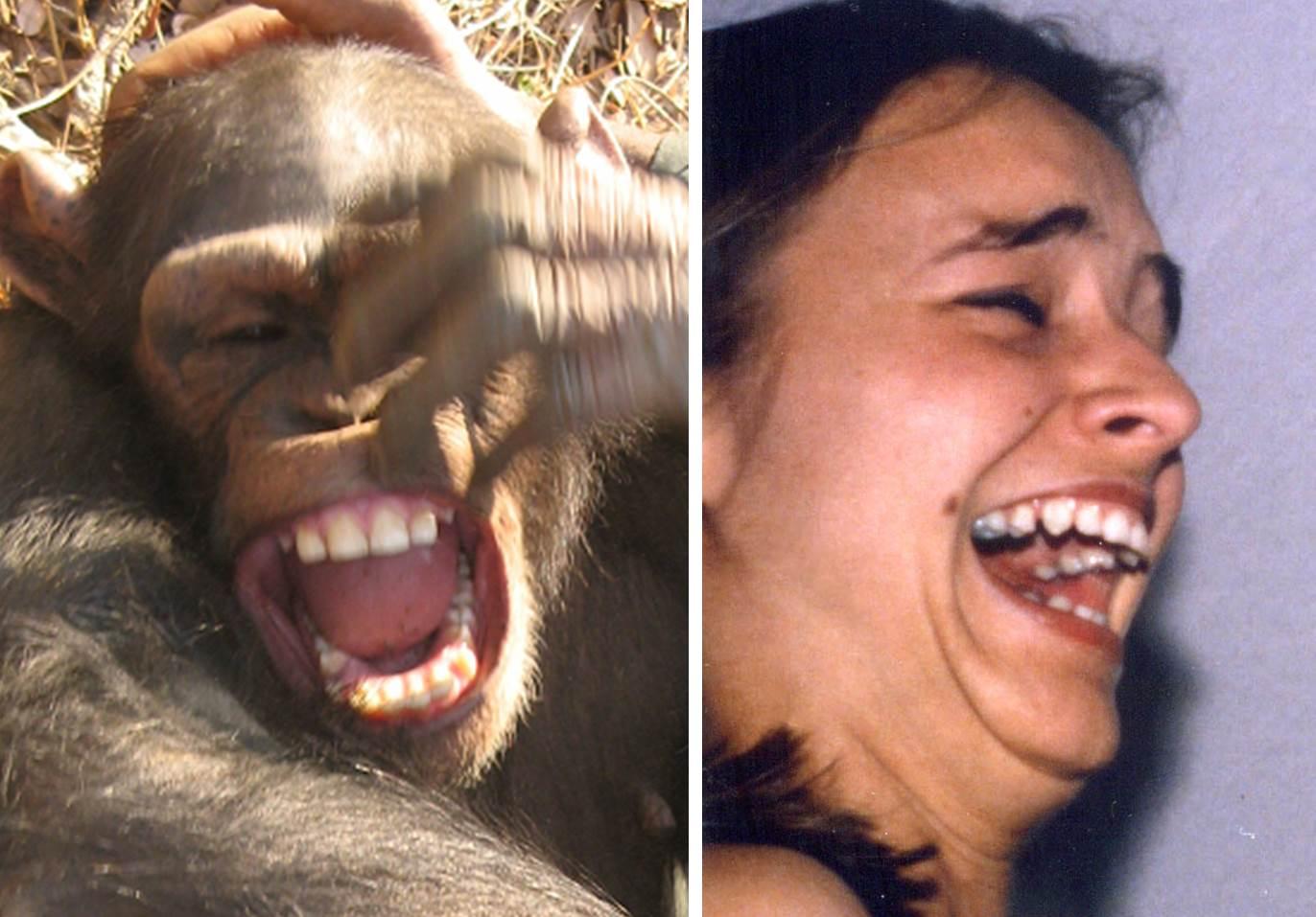 Un chimpancé y un humano, riendo. Fuente: Universidad de Portsmouth.