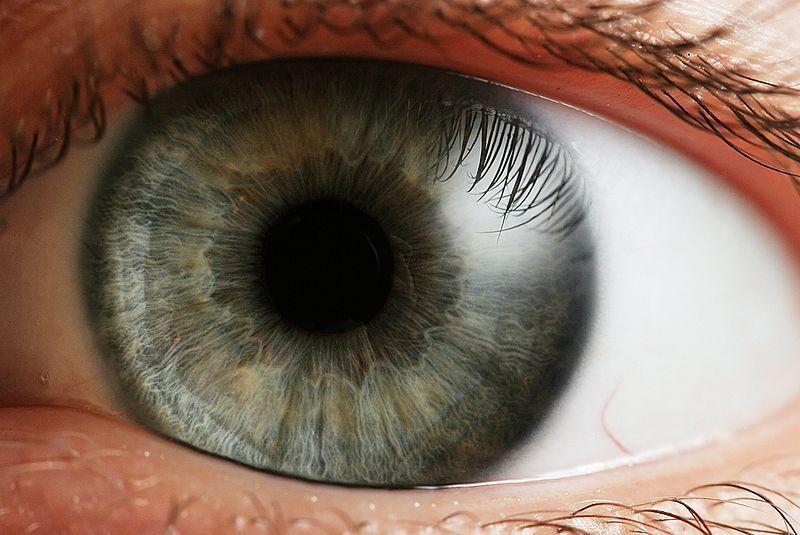 Ojo humano. Fuente: Wikimedia Commons.