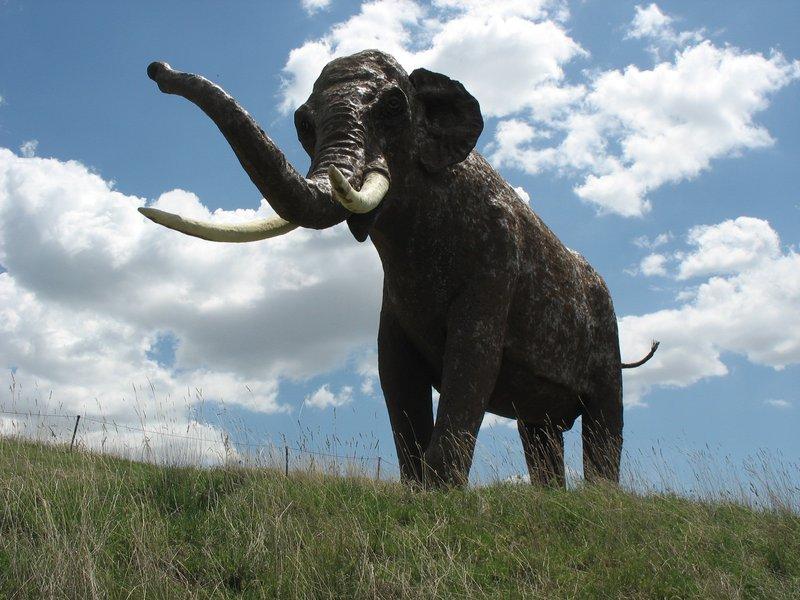Recreación a tamaño natural de un Palaeoloxodon antiquus en España. Wikipedia.