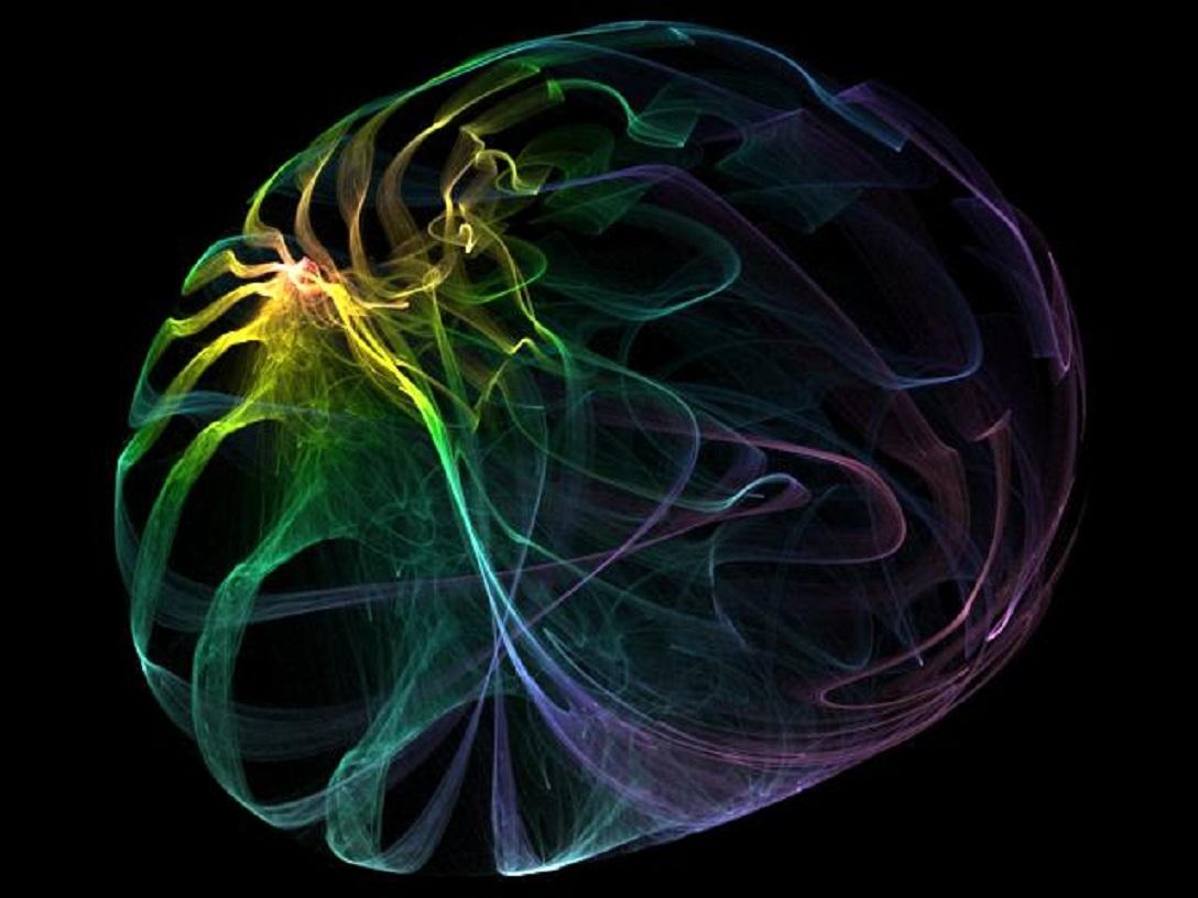 Cerebro. Imagen: kittykatfish. Fuente: Flickr.