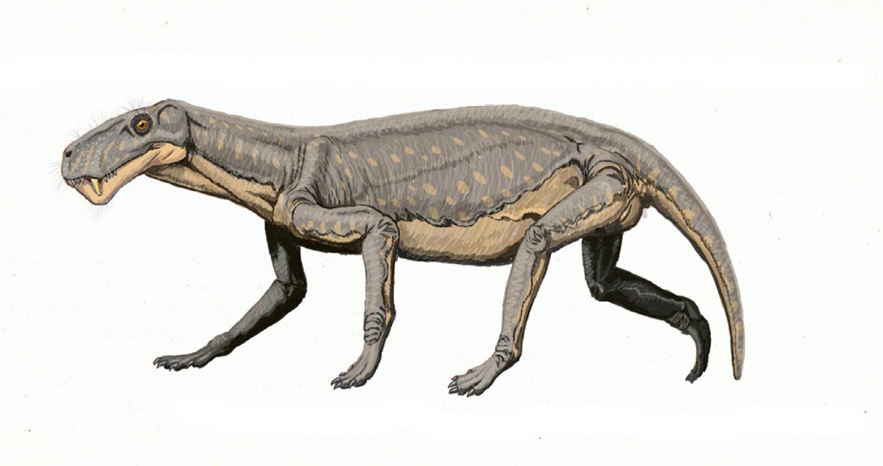 Lycaenops, un gorgonopsio, grupo que desapareció en la Gran Mortandad. Imagen: ДиБгд. Fuente: Wikimedia Commons.