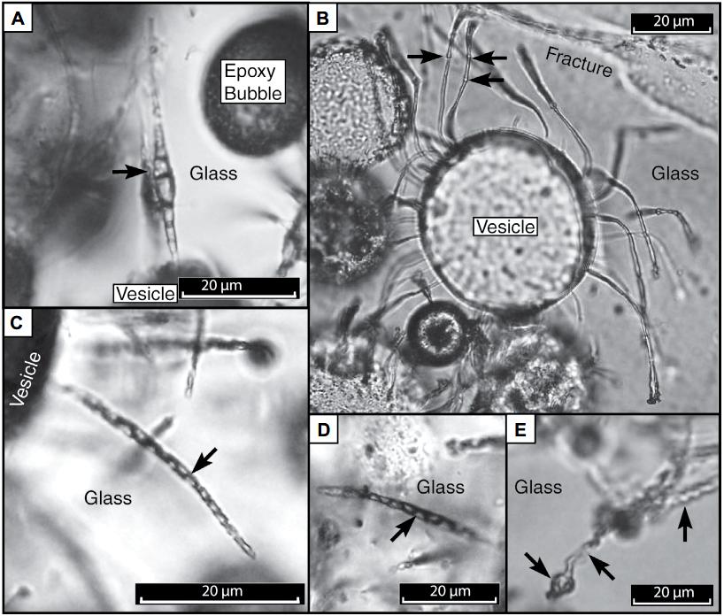 Microtúneles en el vidrio volcánico. Fuente: GSA.