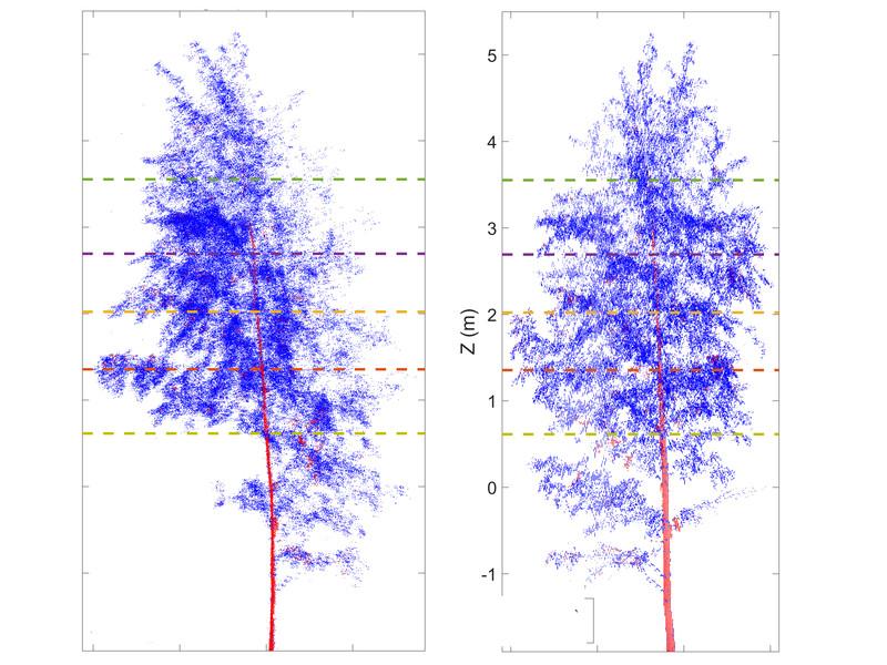 Movimiento de un árbol entre el día y la noche. Fuente: Universidad Técnica de Viena.