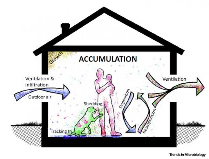 Ciclo de los microbios entre el exterior y el interior de un edificio. Imagen: Peccia y Kwan. Fuente: Trends in Microbiology.