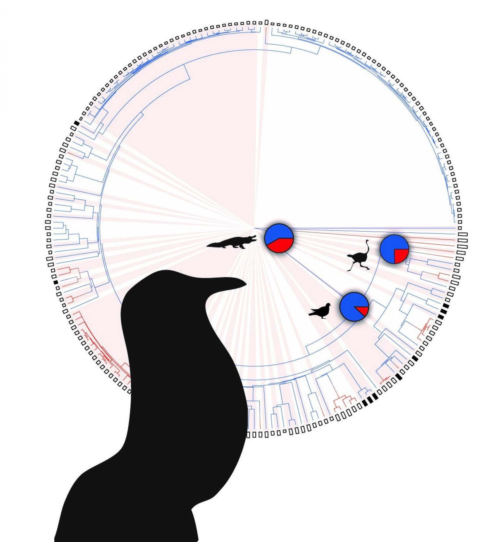 Probabilidad de que cada tipo de animal vocalice con la boca cerrada (azul) o con la boca abierta (rojo). Imagen: T. Riede. Fuente: Universidad de Texas en Austin.
