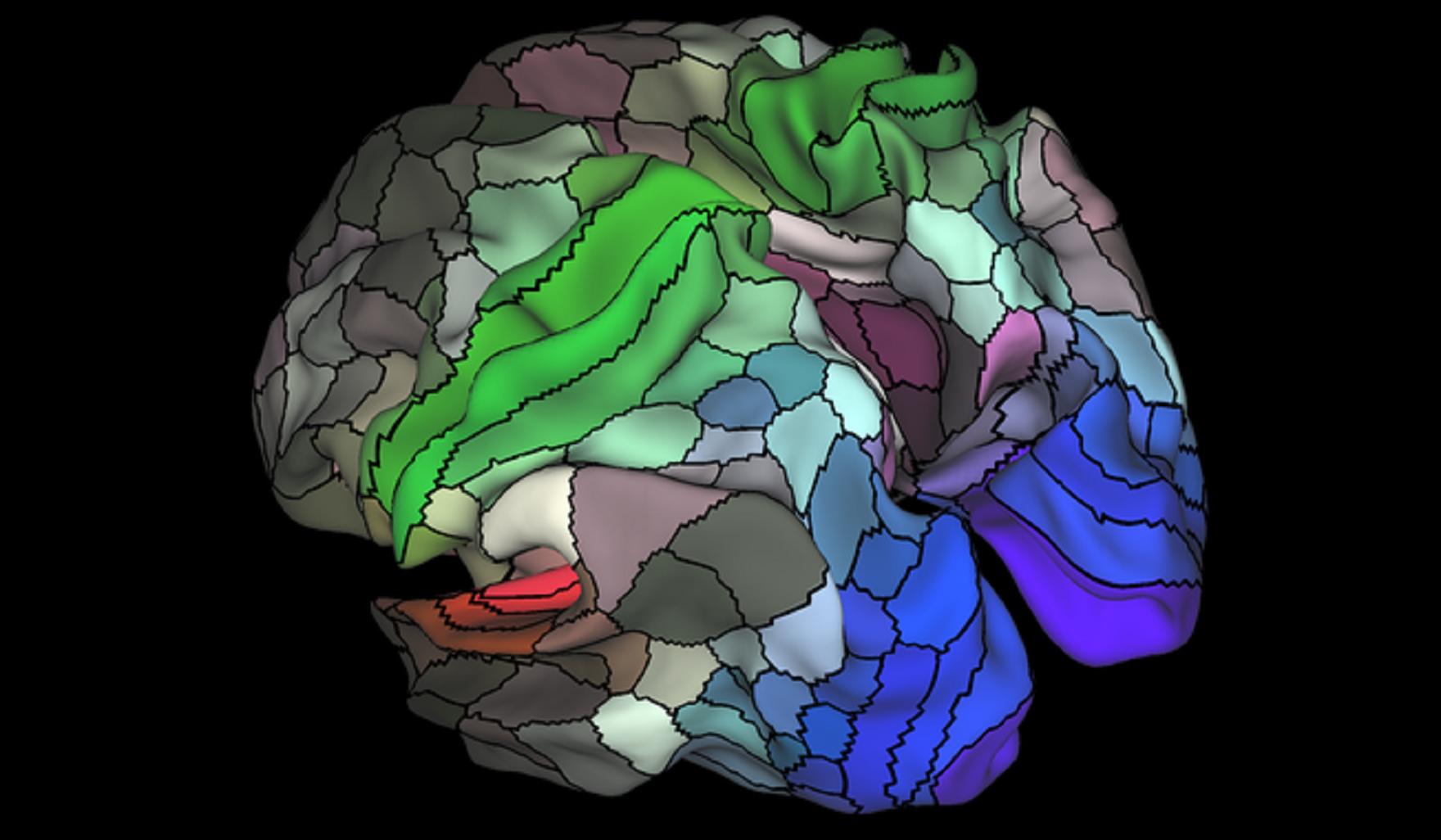 La imagen muestra una parcelación de 180 áreas en el córtex  humano en las superficies del hemisferio derecho e izquierdo. Imagen: Matthew F. Glasser, David C. Van Essen. Fuente: Sinc.