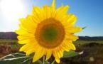 El crowdfunding impulsa las energías renovables