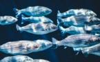 El calentamiento del mar reducirá el tamaño de los peces