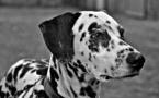 Nuevos estudios demuestran la autoconsciencia de los animales no humanos