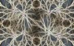 Una investigación relaciona la entropía con el surgimiento de la consciencia