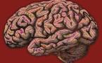 La consciencia podría ser un instinto