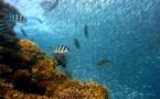 Los arrecifes se defienden ante el calentamiento global