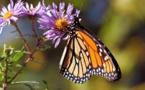 Los insectos se enfrentan a un colapso catastrófico