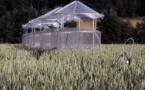 Las concentraciones de ozono reducen la producción mundial de alimentos