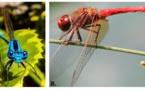 Identificadas las claves para la supervivencia de los insectos