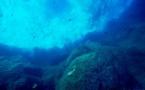 Los océanos están perdiendo ingentes cantidades de oxígeno