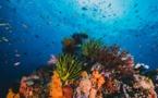 Los corales se preparan para una extinción masiva