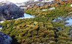 Primera ola de calor en la Antártida Oriental