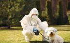 Los perros no representan ningún peligro ante el coronavirus