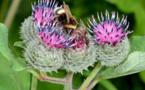 Dramática pérdida de las plantas que alimentan a los insectos