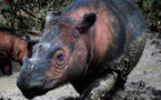 Se acelera la sexta gran extinción