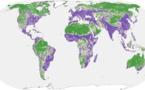 La mitad del planeta todavía está intacta