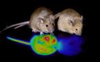 La animación suspendida puede ser inducida manipulando el cerebro