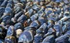 La concha de mejillón mejora la fertilidad de los suelos ácidos