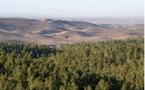 La contaminación industrial ayuda a reverdecer los desiertos