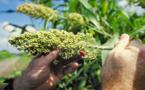 Las prácticas agrícolas tradicionales aumentan la biodiversidad