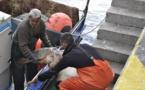 El programa 'Tortuga a bordo' ayudará a salvar tortugas en Murcia y Andalucía