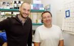 Un complejo enzimático, nueva diana terapéutica para la fibromalgia