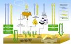 La agricultura ecológica convierte los cultivos en auténticos sumideros de CO2