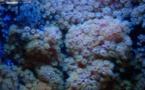 La vida marina salvaje se redujo a la mitad entre 1970 y 2012
