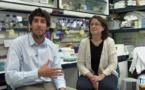 La genética molecular de las plantas, investigación y aplicación