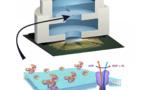 Crean chips que se alimentan de energía igual que las células vivas