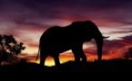 Drones y sistemas de información geográfica para controlar la caza furtiva de elefantes